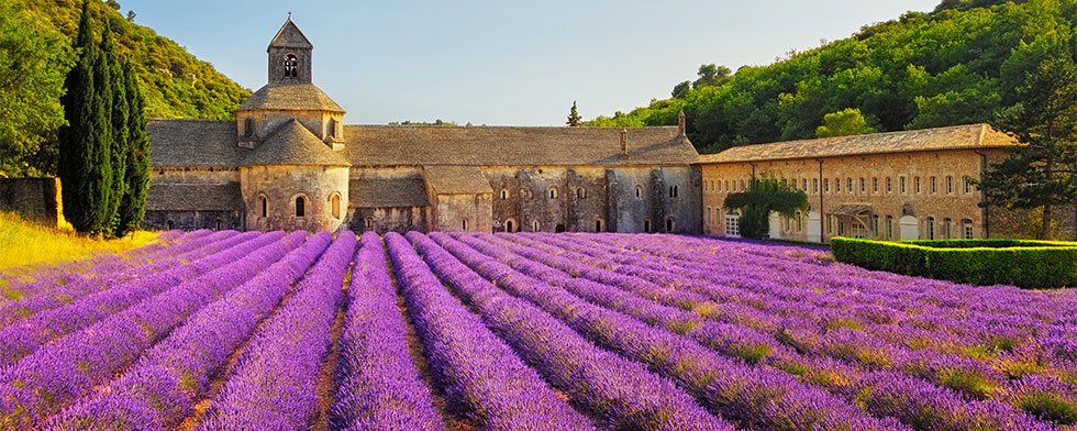 Blooming Provence lavender fields at Senanque Abbey
